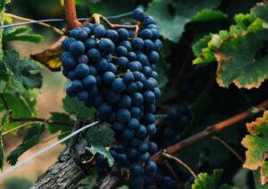 Top 5 wijnregio's die je niet mag missen bij een bezoek aan Frankrijk